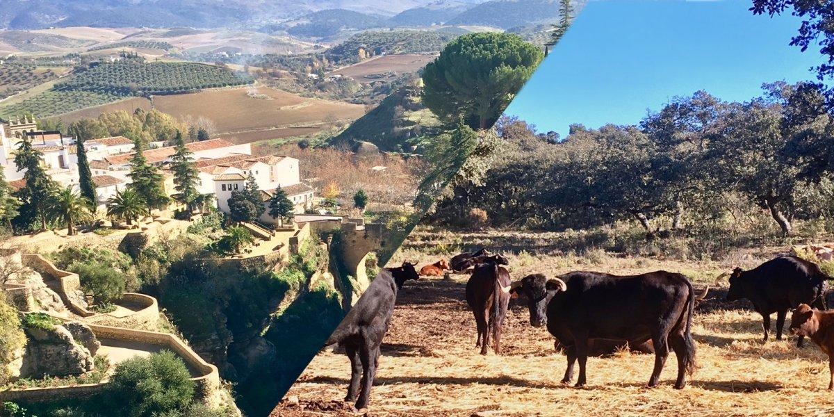 Familienausflug nach Ronda