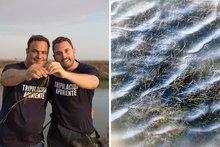 El equipo de I+D de Aponiente lleva más de tres años investigando, junto a la universidad de Cádiz, la zostera marina y sus semillas / Foto: Cortesía Aponiente